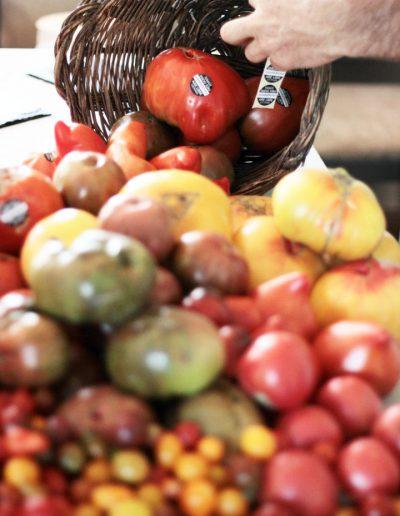 tomates2jpg