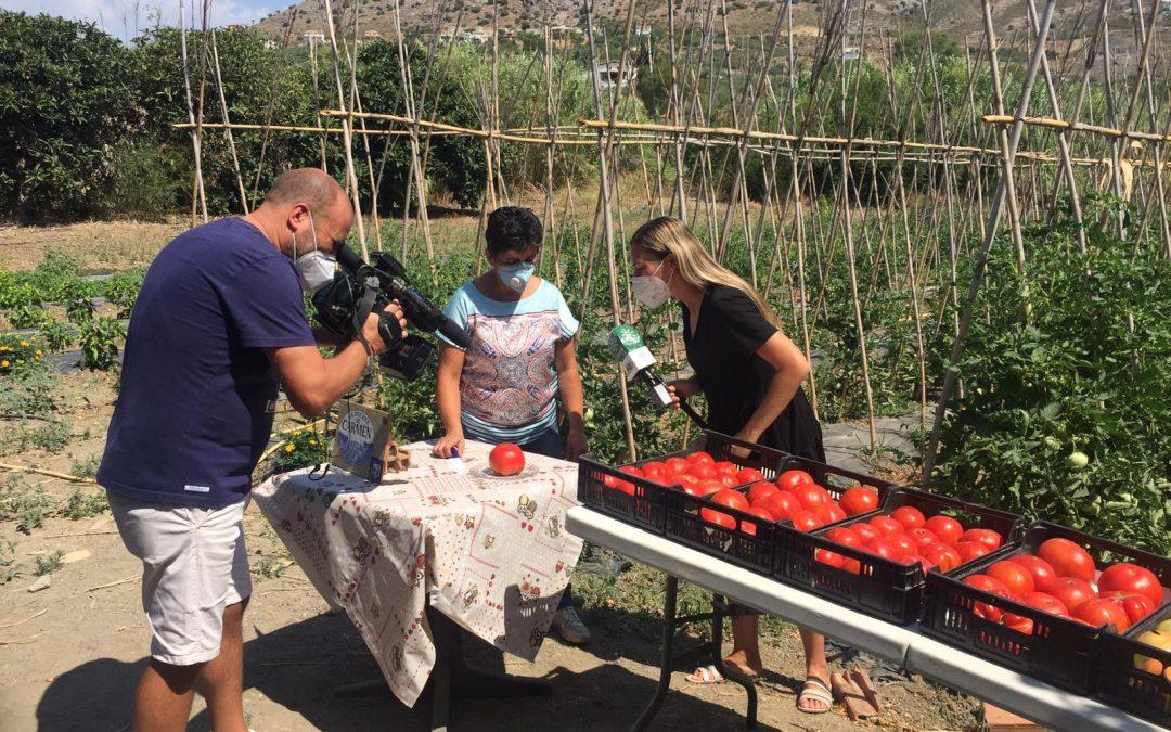El tomate Huevo de Toro protagonista en Andalucía Directo