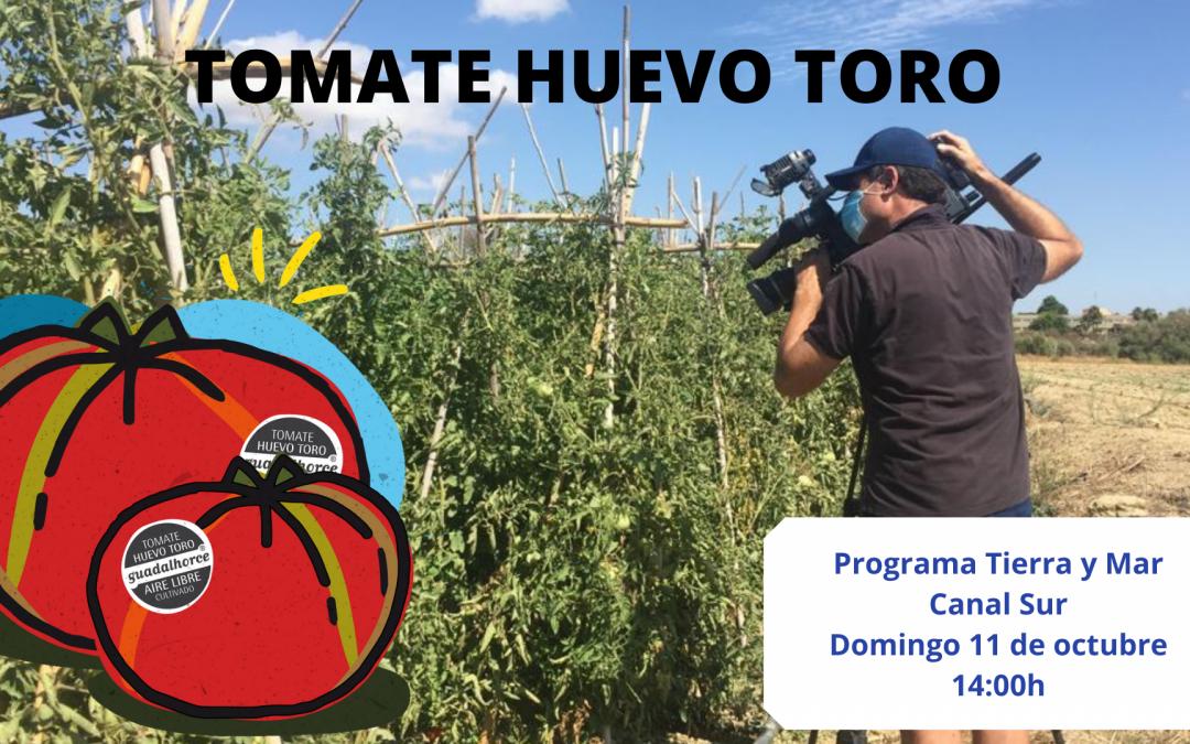 Tierra y Mar dedica un completo reportaje al tomate Huevo Toro