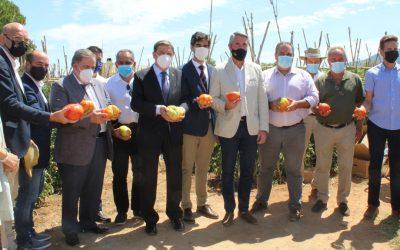 El ministro Luís Planas con el Tomate Huevo de Toro